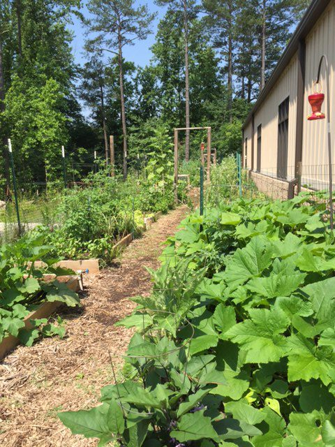 Nativity Community Vegetable Garden-sharing with our community